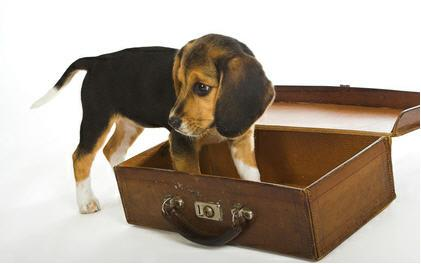 Puppy coming home in a suitcase, great puppy training and puppy classes in Guelph, Ontario at Dog Friendship Inc.